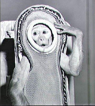 monkey_sam
