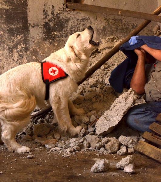 perro-rescate