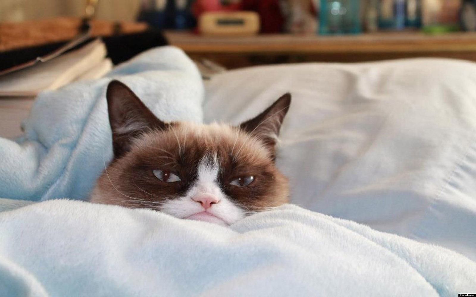 grumpy-cat-