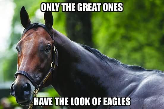 caballo-meme