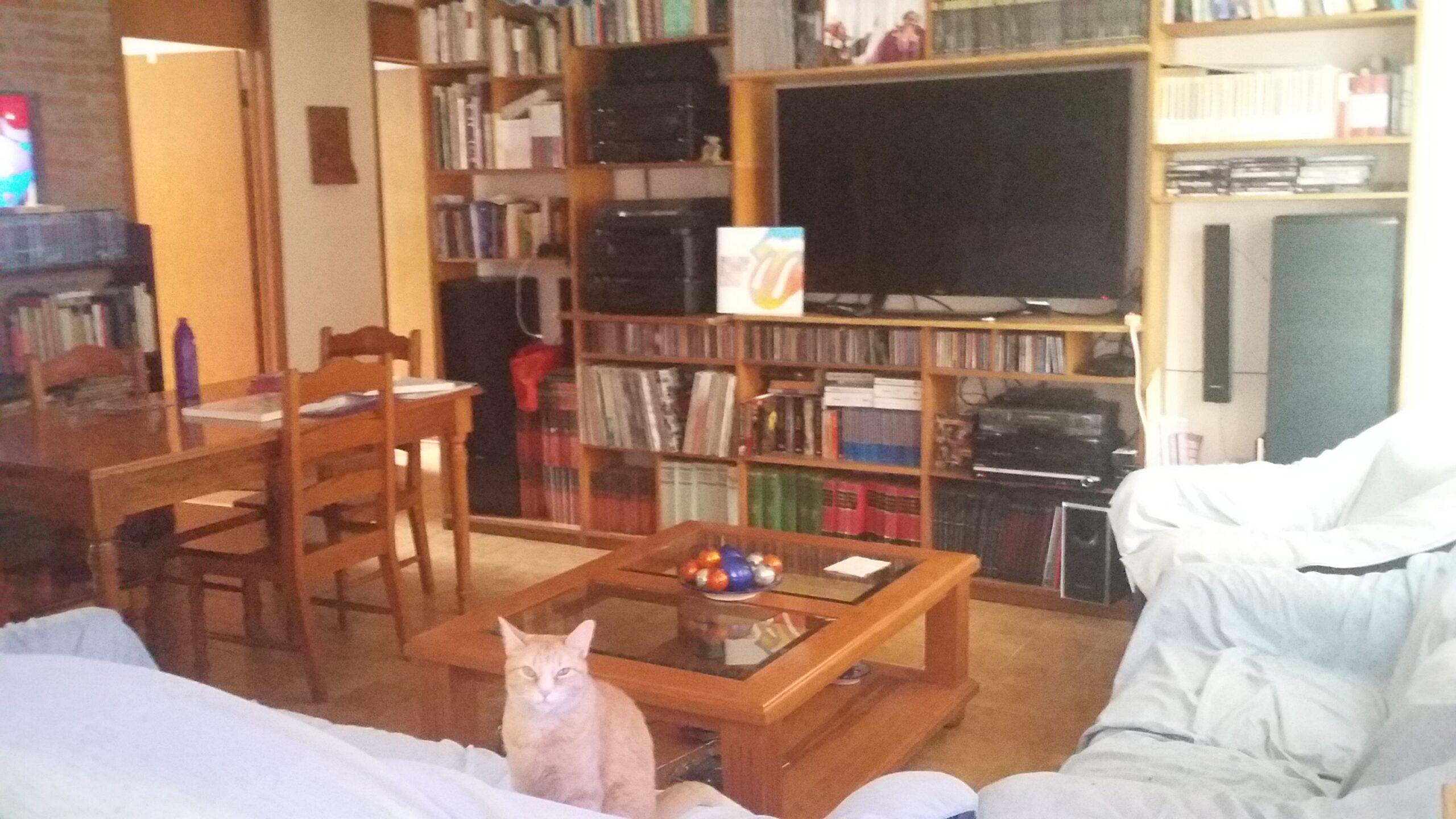 con_gato_2_1