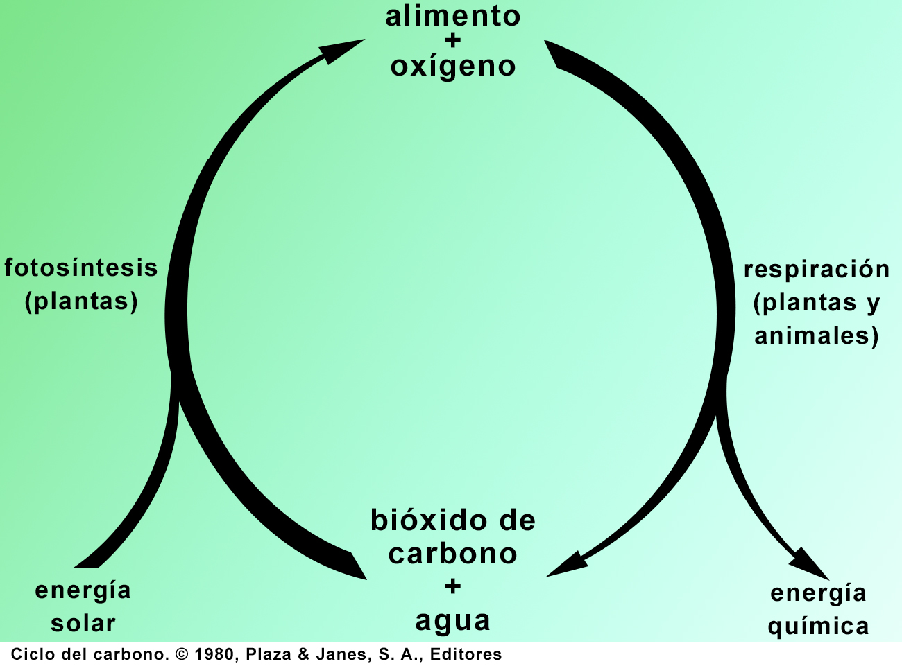 ciclo_carbono_1