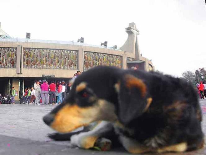 perros-abandonados-basilica