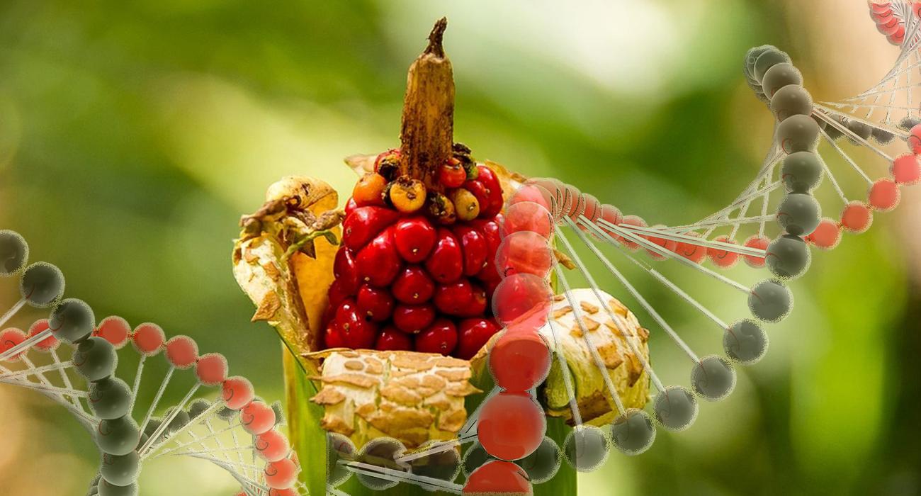 cultivos_transgenicos