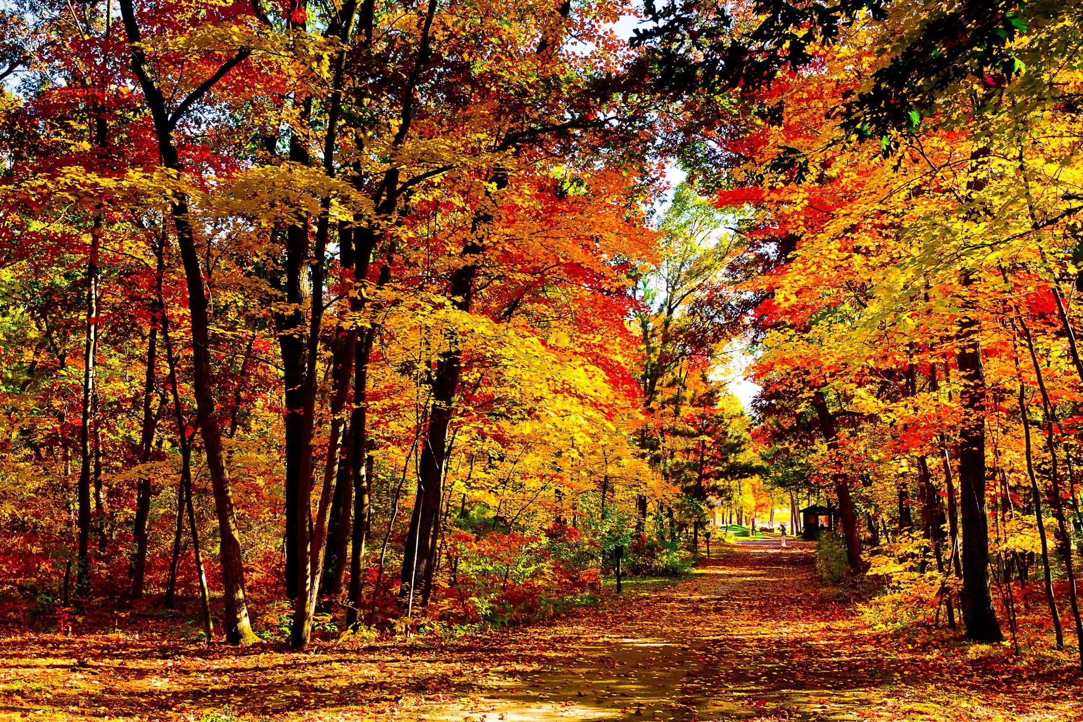 wood-yellow-trees-nature-landscape-autumn-1080p-wallpaper