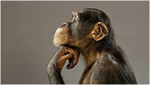 inteligencia-animal