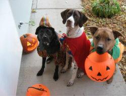 Perros Halloween